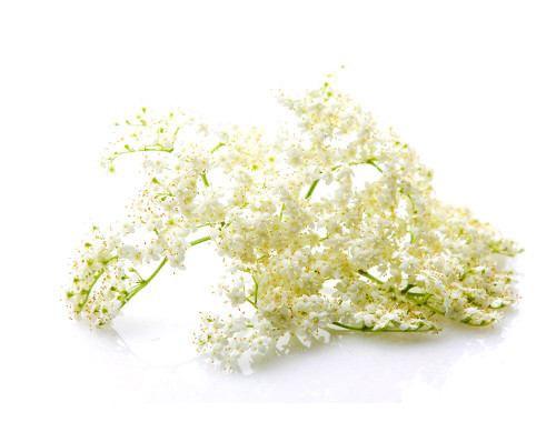elderflower-avatar