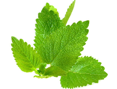 lemon-balm-avatar
