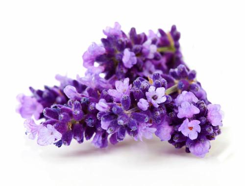lavender-avatar